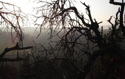 Branche morte
